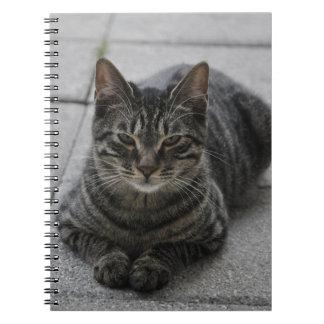 Tabby Cat Notebook