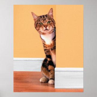 Tabby cat peeking around wall poster