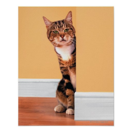 Tabby cat peeking around wall posters | Zazzle