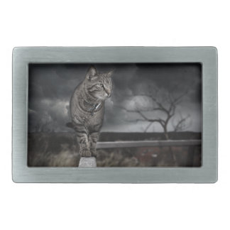 Tabby Cat Rectangular Belt Buckles