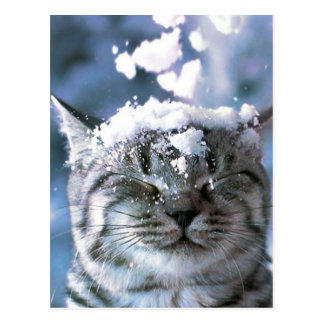 Tabby Cat  Snow Splash Postcard