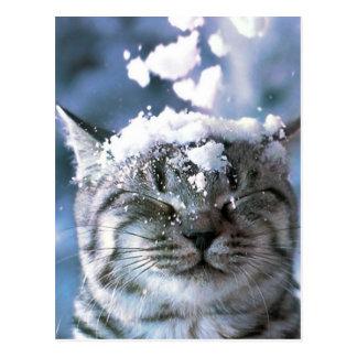 Tabby Cat  Snow Splash Postcard