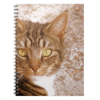 Tabby Cat Spiral Note Book