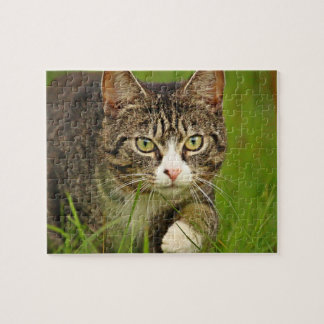 Tabby Cat Stalking Jigsaw Puzzle