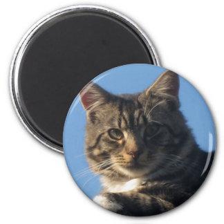 Tabby Cat = Standard Round Magnet 5.7cm