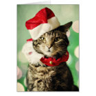 Tabby cat wearing a Christmas hat and collar Card
