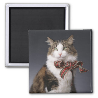 Tabby cat wearing plaid bow square magnet