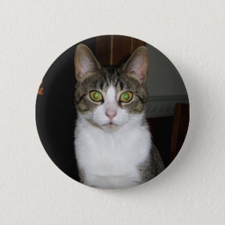 Tabby cat with big green eyes 2 inch round button