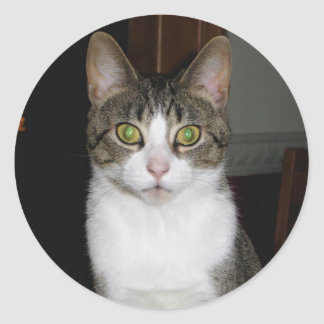 Tabby cat with big green eyes classic round sticker