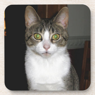 Tabby cat with big green eyes coaster