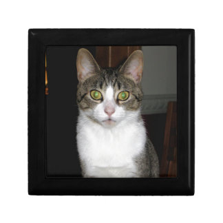 Tabby cat with big green eyes gift box