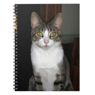 Tabby cat with big green eyes notebooks