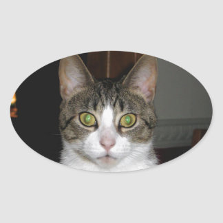 Tabby cat with big green eyes oval sticker