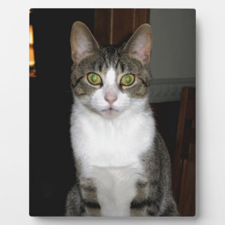 Tabby cat with big green eyes plaque
