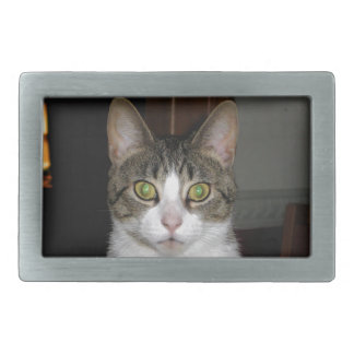 Tabby cat with big green eyes rectangular belt buckles