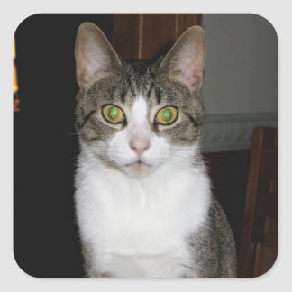Tabby cat with big green eyes square sticker