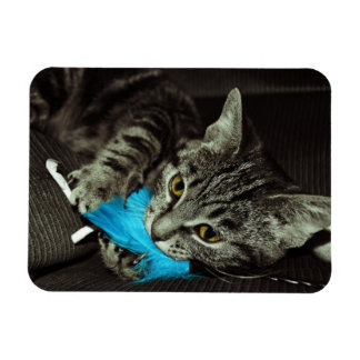 Tabby Cat with Feather by Shirley Taylor Rectangular Photo Magnet