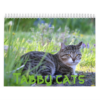 Tabby cats wall calendars