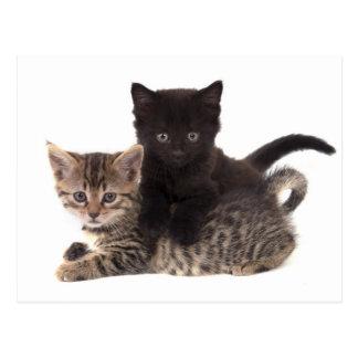 tabby kitten black kitten postcard