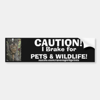 TABBY KITTEN Bumper Sticker Collection