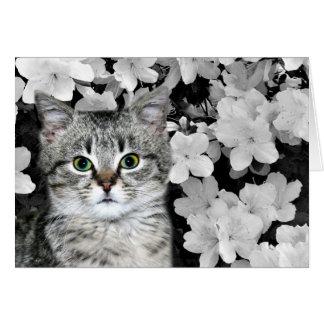Tabby kitten in azaleas card
