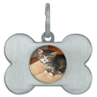Tabby Kitten Named Miss Pip Squeak Pet Name Tag