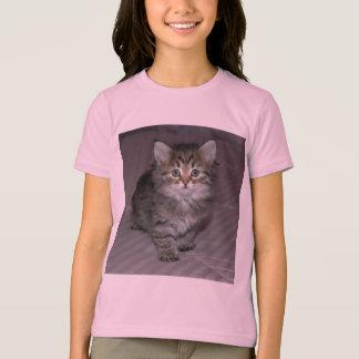 Tabby Kitten Shirt