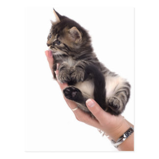 tabby kitten who licks postcard