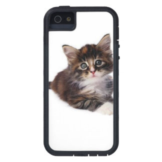 Tabby Kitty iPhone 5 Case