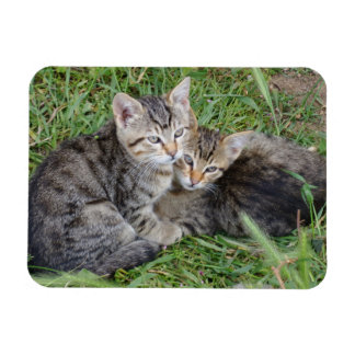 "Tabby Sisters 3""x4"" Magnet"