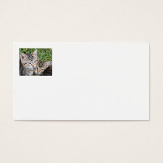 Tabby Sisters Business Cards