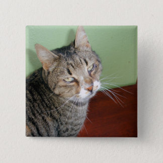 Tabby Time 2 Inch Square Button
