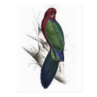 Tabuan Parrakeet by Edward Lear Postcard