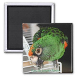 Taco the Jardine Parrot Square Magnet