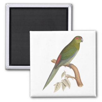 Tahiti Parakeet Illustration, c. 1849 Magnet