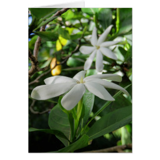 Tahitian Gardenia Card