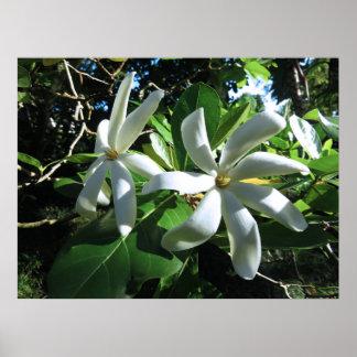 Tahitian Gardenia Poster