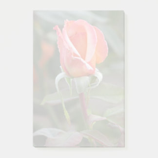 Tahitian Sunset Orange Rose Post-it Notes