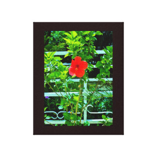 Taif Flower Canvas Print