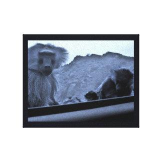 Taif Monkeys Canvas Print