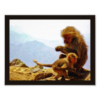 Taif Monkeys Photo Print
