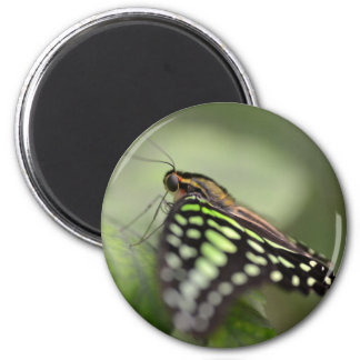 Tailed jay butterfly on leaf 2 inch round magnet
