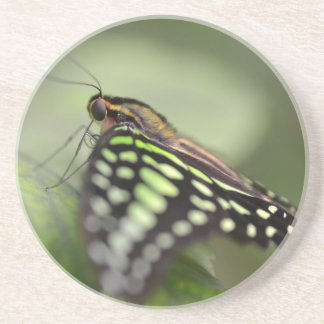 Tailed jay butterfly on leaf drink coaster