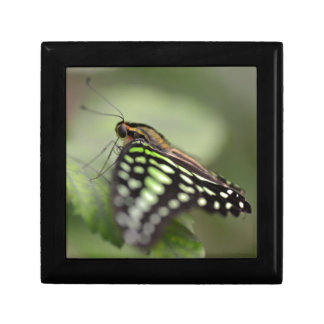 Tailed jay butterfly on leaf gift box