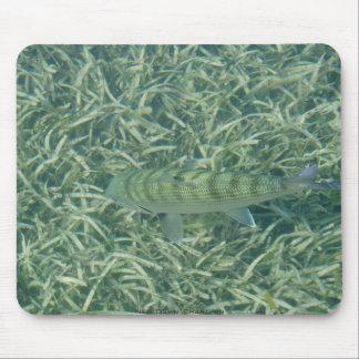 Tailing Bonefish Mouse Pad