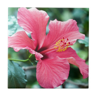 TALK HIBISCUS FLOWER CERAMIC TILE