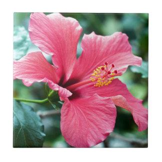 TALK HIBISCUS FLOWER TILE