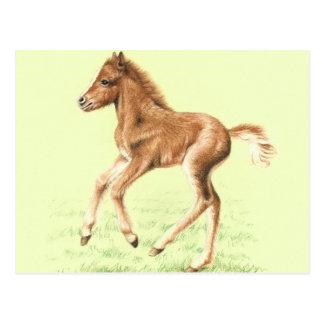 Talk Pony Horse Foal Postcard