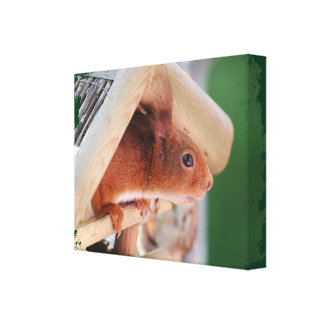 TALK SQUIRREL - Photography Jean Louis Glineur Canvas Print