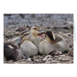 Talkative Mallard Ducklings Card